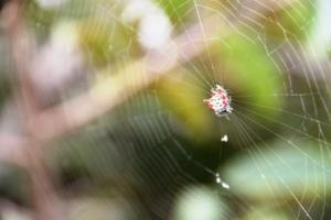 In einem Nationalpark stoßen wir auf eine außergewöhnliche Spinne mit gezacktem Körper.