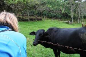 Martina Hirschmeier entdeckt eine Kuh am Rande der Kaffeeplantage in Kolumbien.