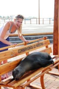 Frau Schlaumeier entdeckt auf den Galapagos-Inseln einen Seehund, der es sich auf einer Bank gemütlich gemacht hat.