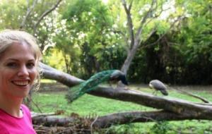 Martina Hirschmeier ist fasziniert von der Anmut der Pfauen auf Islas del Rosario.