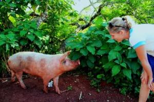 Lustige Begegnung: Frau Schlaumeier trifft am Straßenrand auf ein Hausschwein.