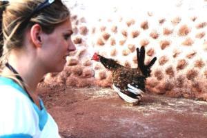 Ganz schön verängstigt - das Huhn flattert in Panik vor der Moderatorin Frau Schlaumeier davon.