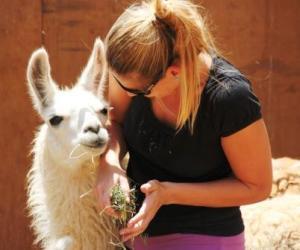 """""""Sind das lange Wimpern"""", denkt Martina Hirschmeier beim Anblick des Lamas."""