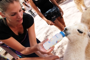 Martina Hirschmeier ist entzückt vom Guanako-Lama-Fohlen in San Pedro de Atacama.