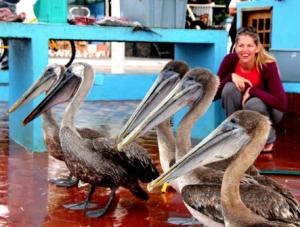 Ganz schön gefräßig die Pelikane aus Chile.