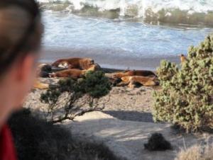 Heute bleiben die Seelöwen vom Angriff der Orcas verschont.