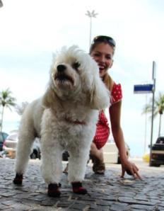 Ein Hund mit Schuhen! An der Copa Cabana keine Seltenheit, wie Martina Hirschmeier erfährt.
