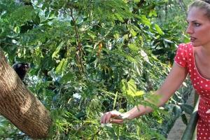 Auf dem Zuckerhut entdeckt Martina Hirschmeier kleine Weißbüscheläffchen!