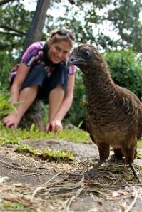 Auf einer Farm im Amazonasregenwald trifft Martina Hirschmeier auf dieses Wildhuhn.
