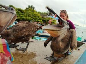 Die frechen Pelikane im Hafen stauben bei den Fischern ihr Frühstück ab.