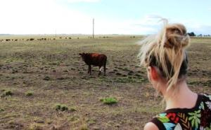 Auf unendlichen Weiten grase die argentinischen Rinder.